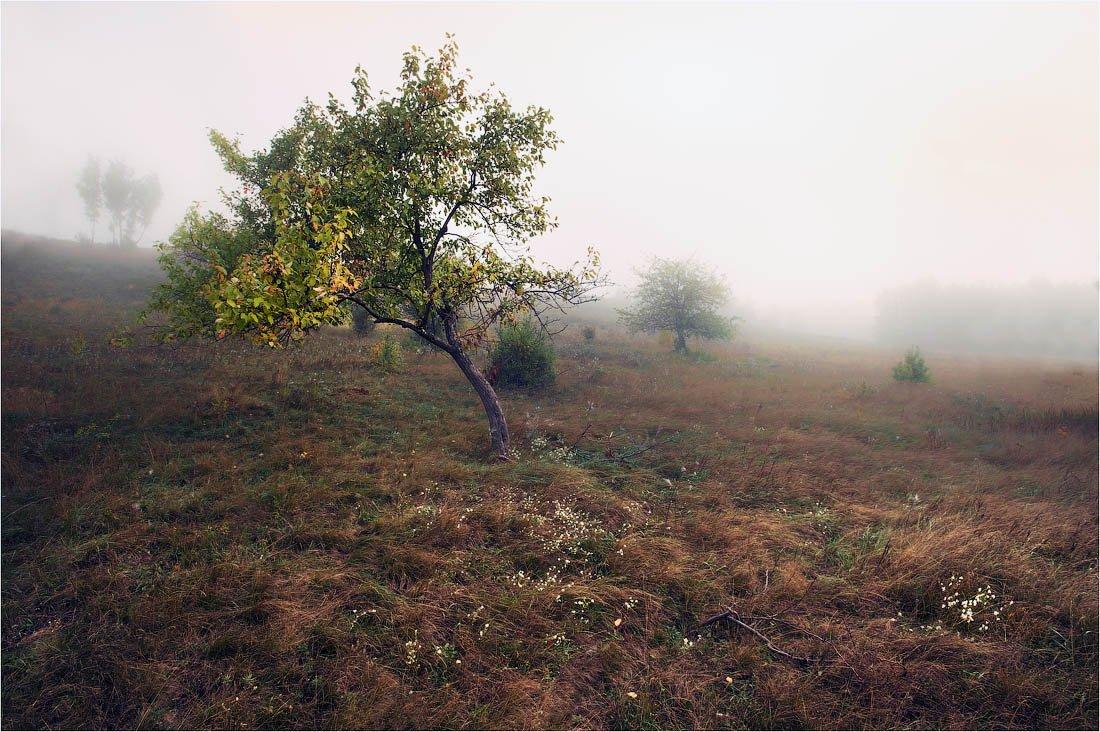 осень, утро, яблони, влажно, сыро, грустно, Кутыгин Эдуард