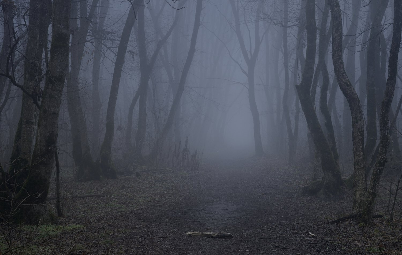 лес рассвет зима, Александр Жарников