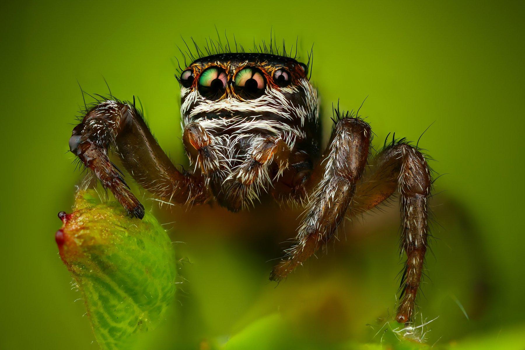 паук макро природа портрет цвет зеленый растение, Шаповалов Андрей