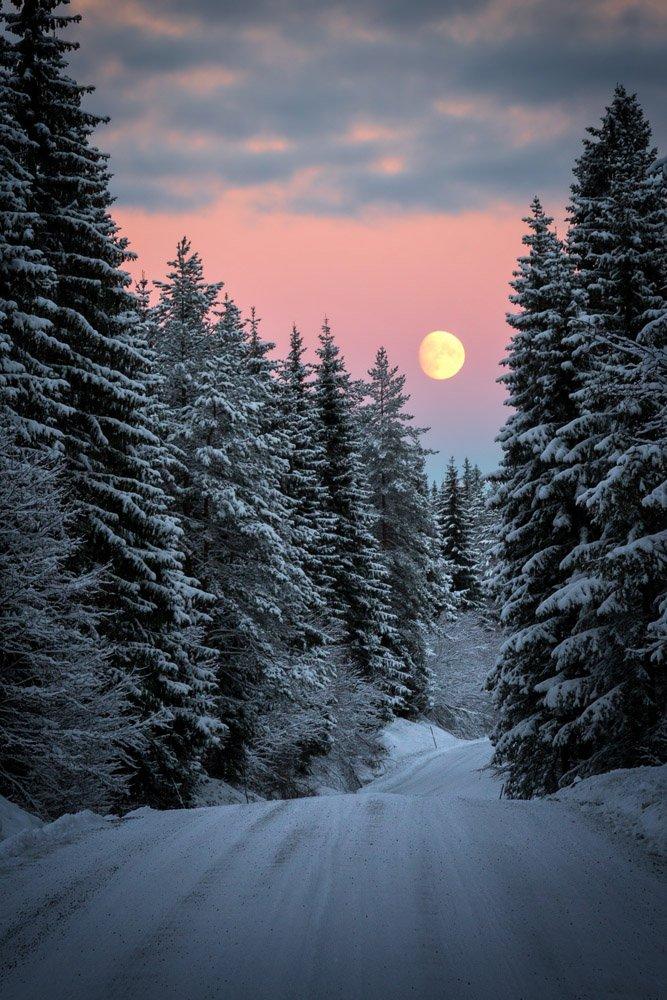 winter,forest,moon,moonrise,woodland,woods,norway,norwegian,north,snow,, Szatewicz Adrian