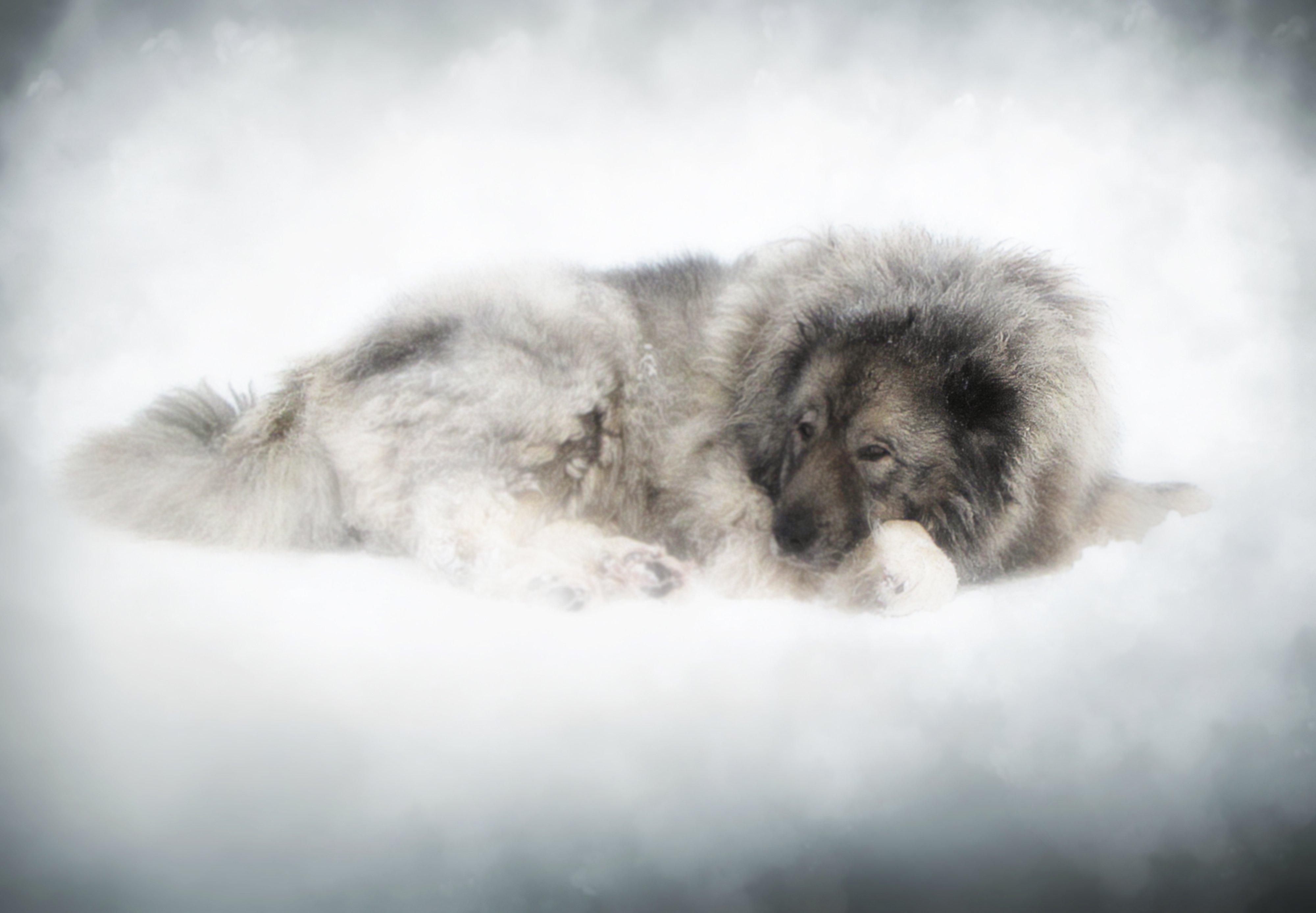 mist,day, country, countryside, outdoor, winter,tree,road,snow,animal, dog,, Dzintra Regina  Jansone
