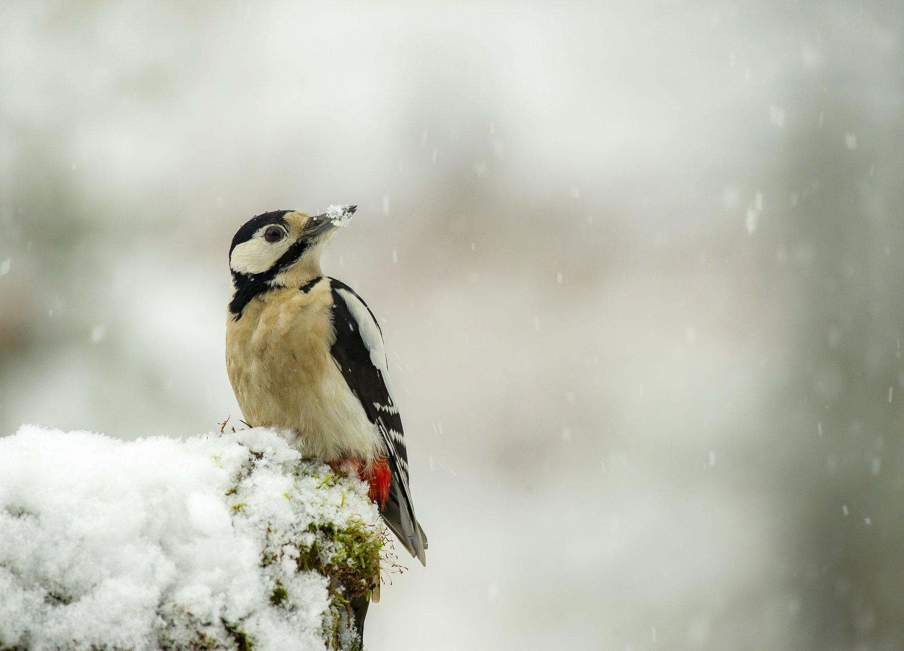 птицы,природа, зима, Киселёв Андрей