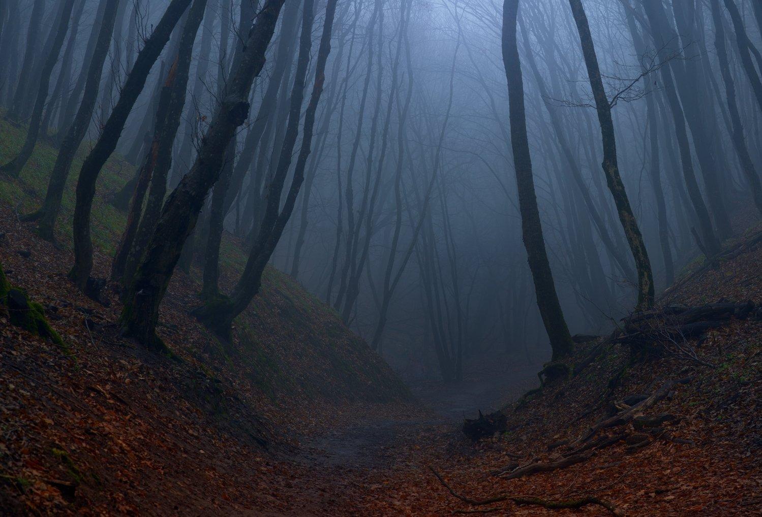 осень листва утро деревья, Александр Жарников