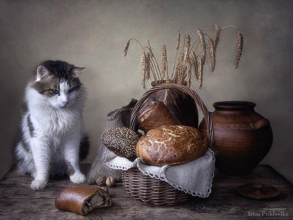постановочное фото, котонатюрморт, кот Лева, натюрморт , хлеб, деревенский, домашние животные, кошки, Ирина Приходько