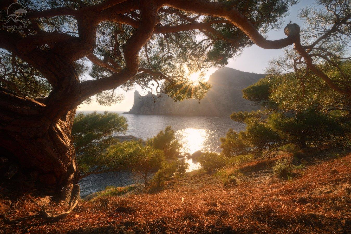 пейзаж, природа, дерево, крым, горы, Гордиенко Анатолий