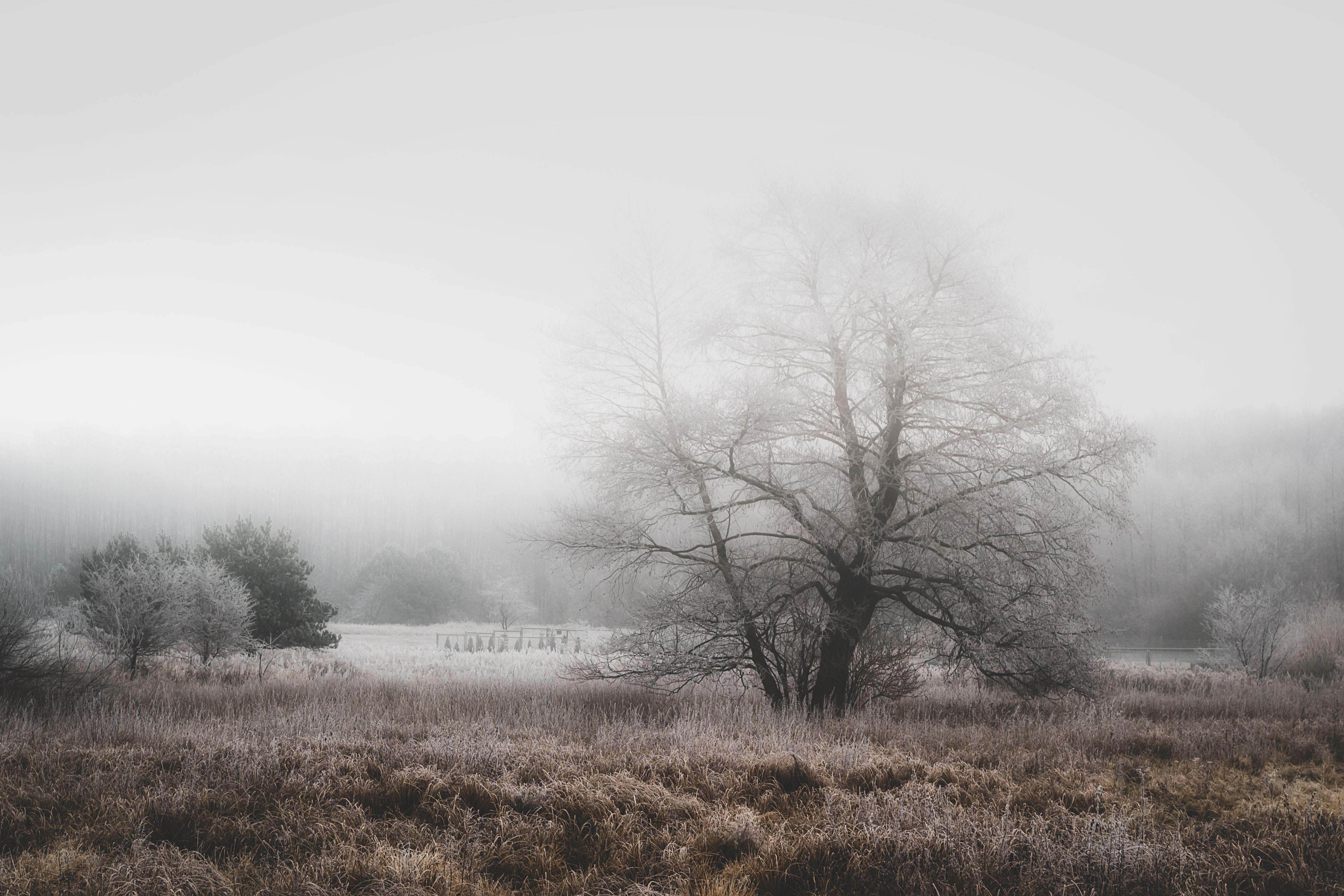 tree,nature,winter,sky,landscape,nikon,morning,fog,mist, ground frost, Tollas Krzysztof