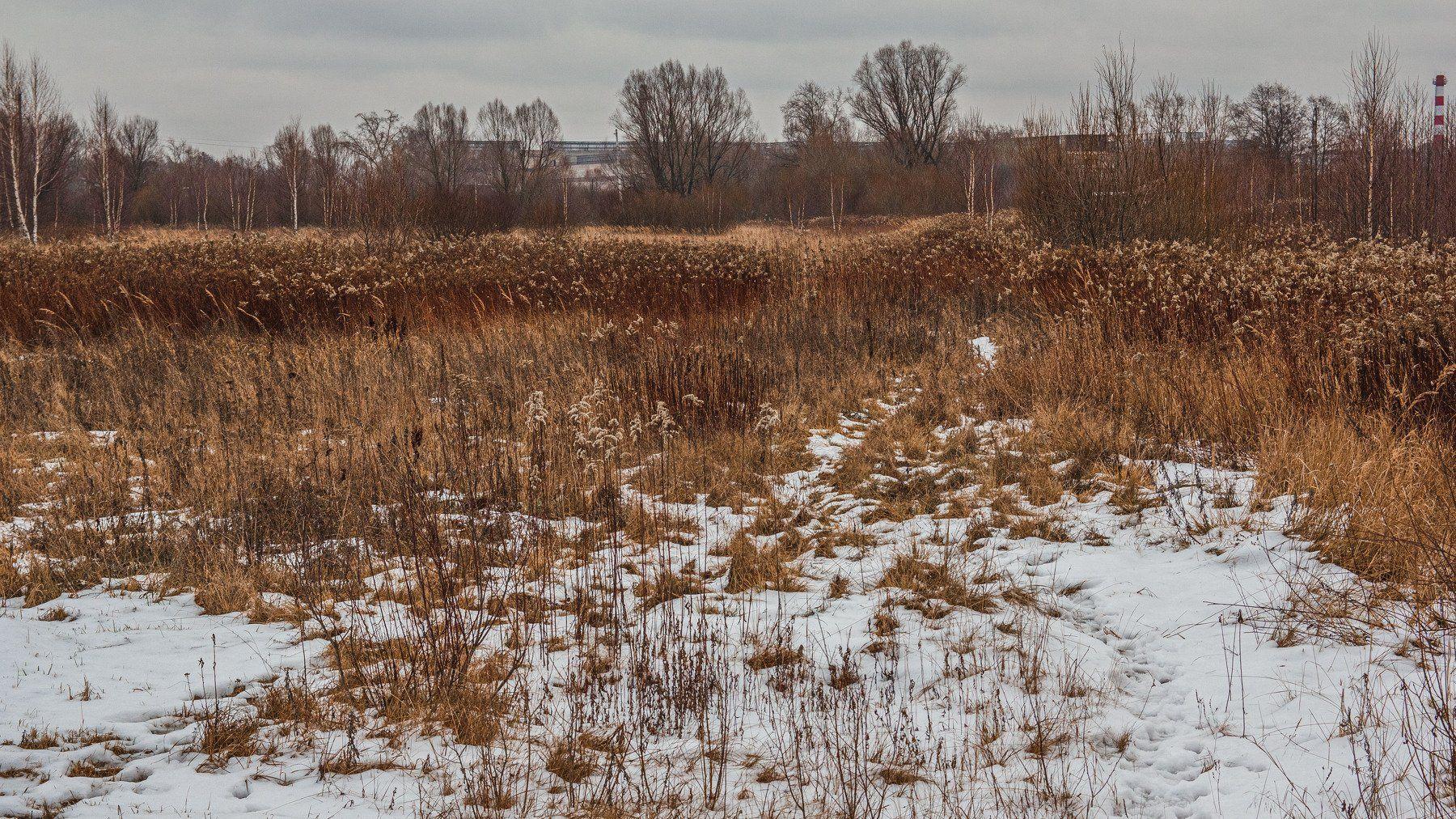 пейзаж, кулебаки, landscape, winter, зима, снег, snow, поле, трава, кустарник, field, grass, bush, Васильев Владимир