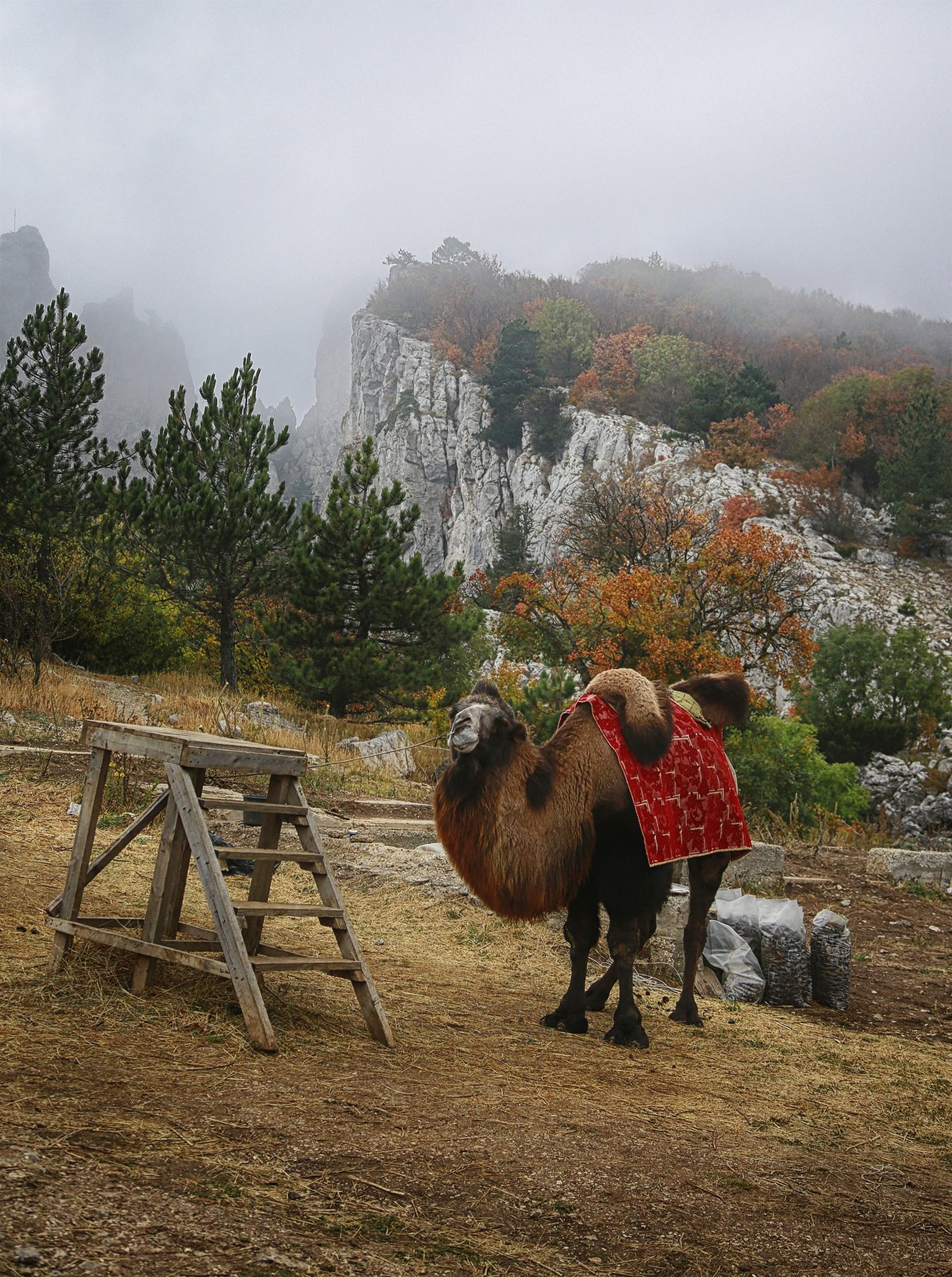 Ай-Петри, склон, верблюд, туман, БАРДЕНЦЕВ Александр