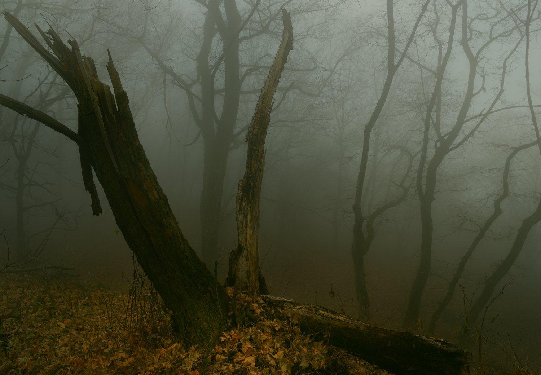 осень листва утро деревья туман, Александр Жарников