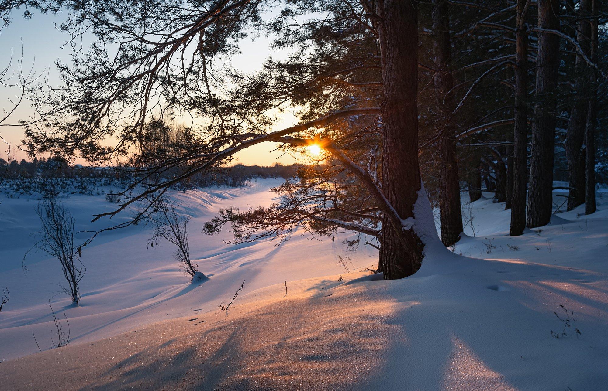 вечер, мороз, сосняк,  Гобова Наталья