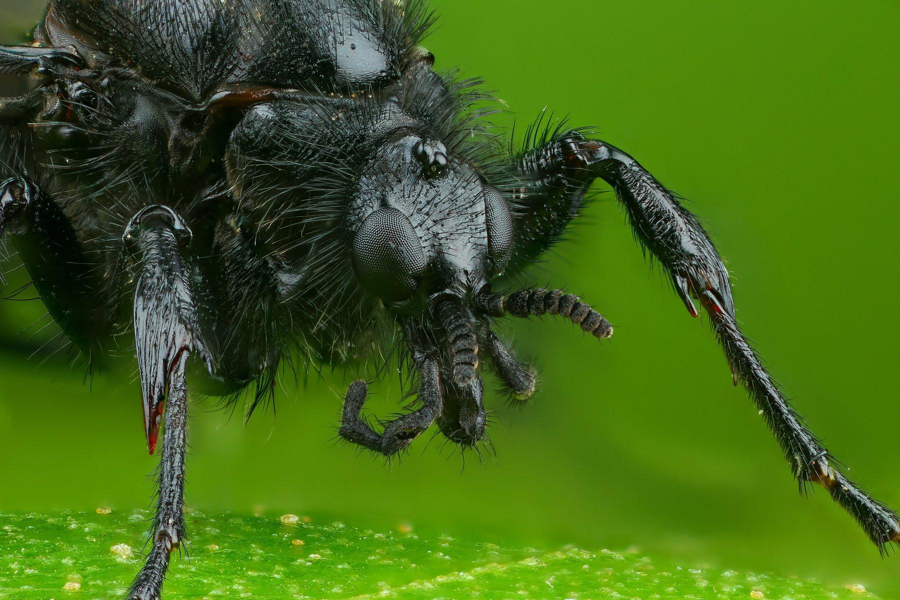 комар портрет макро природа цвет зеленый растение, Шаповалов Андрей