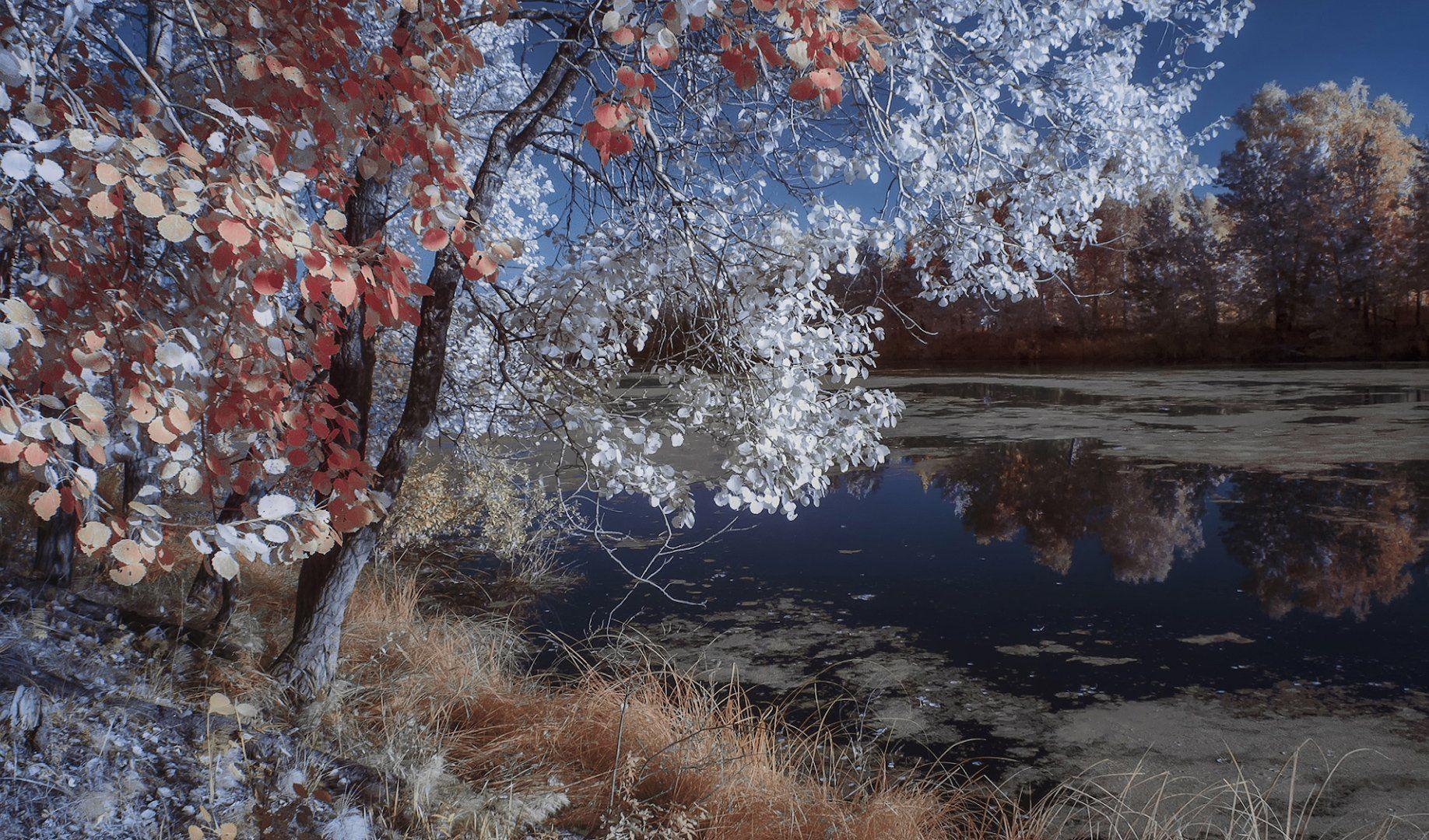 пейзаж, инфракрасная фотография, 630nm,  Гобова Наталья