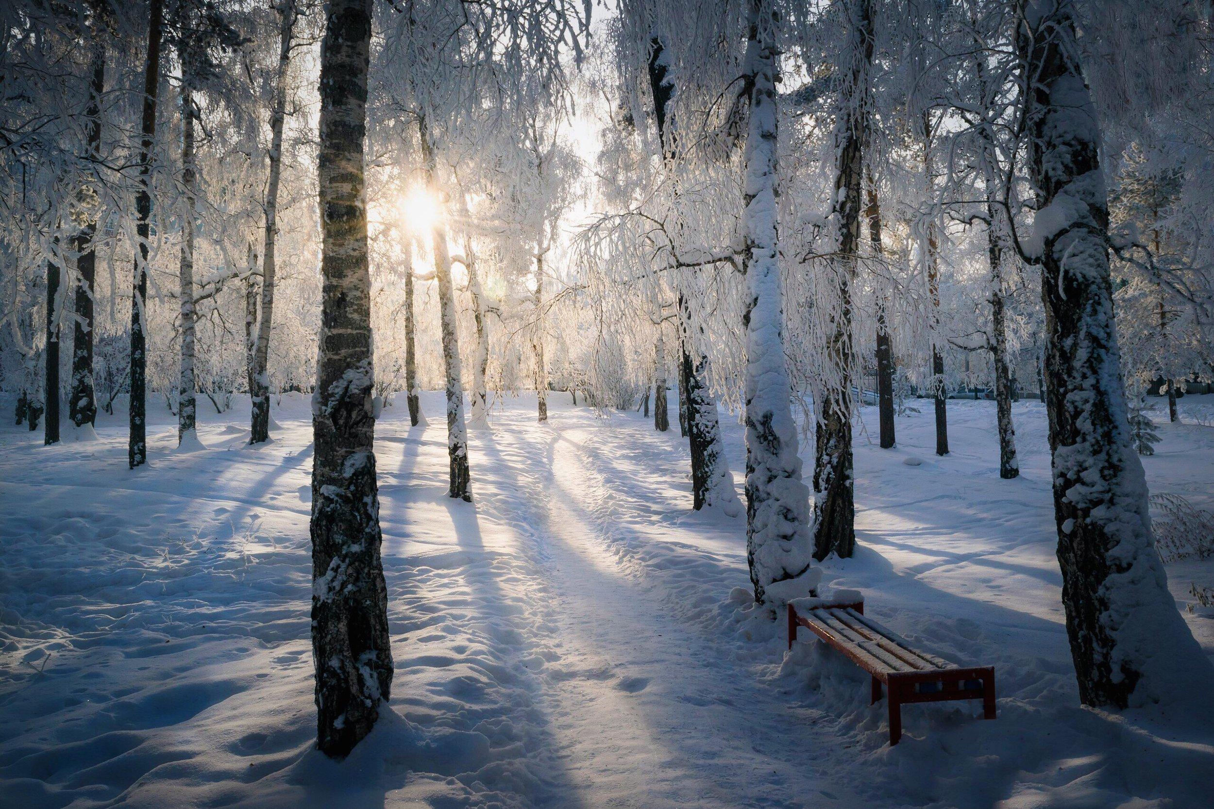 иней, снег, деревья, зима, Назарова Екатерина