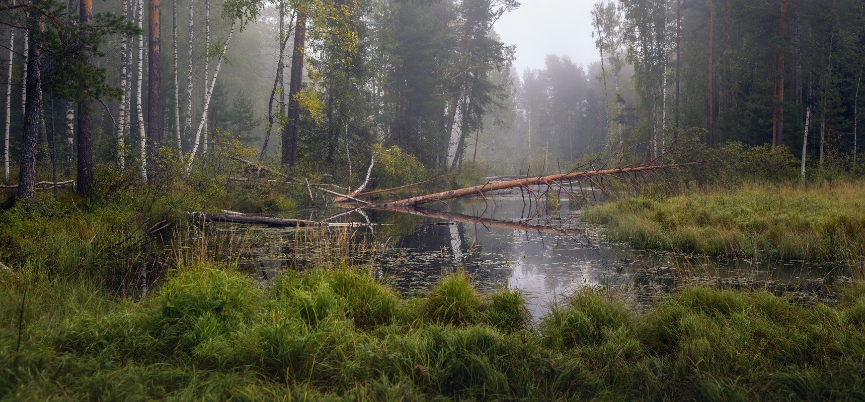 суходол сентябрь туман, Дмитрий Алексеев
