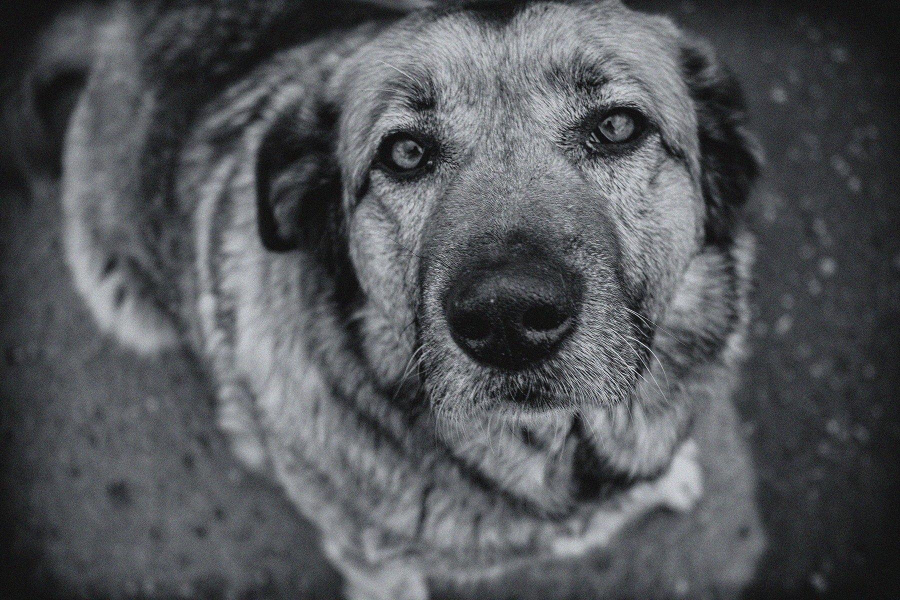 бродяга, взгляд, глаза, животное, пёс, собака, Vladimir Kedrov