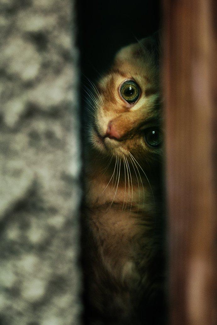 котёнок, рыжий, маленький, Вьюшкин Игорь