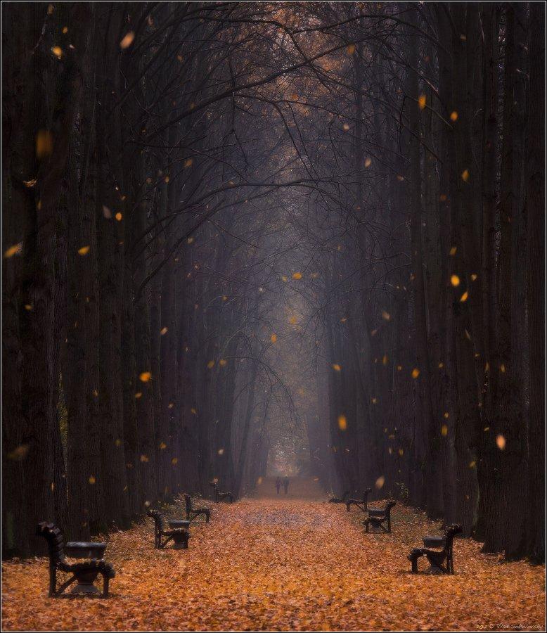 осень, аллея, туман, листопад, двое, перспектива, листья, листва, парк, дымка, пара, nikkor, 70-210/f4, autumn, park, leaves, fog, two, foliage, couple, smoke, alley, nikkor, perspective, leaf, fall, Влад Соколовский
