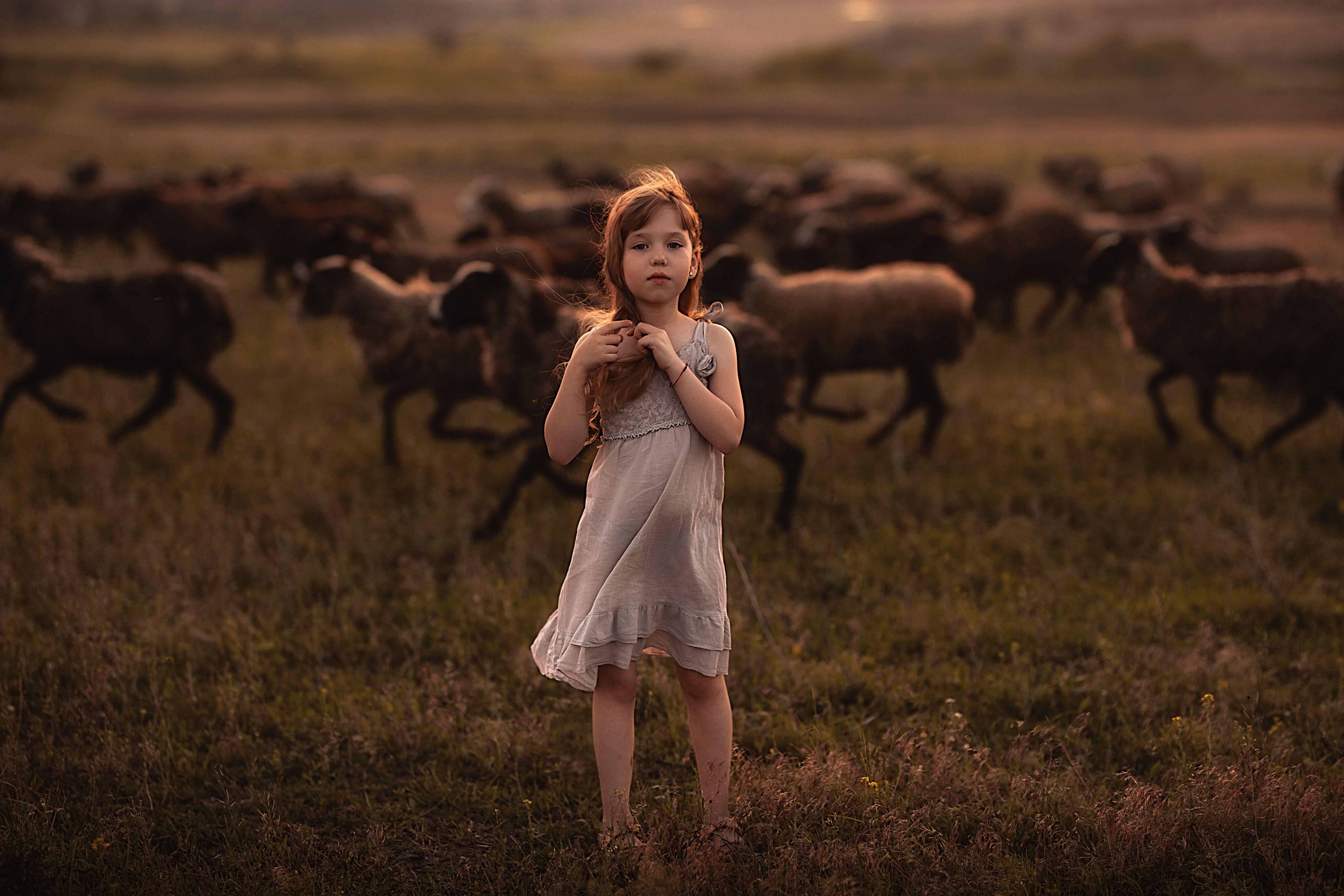 девочка поле закат детство овцы стадо ритм лето безмятежность, Еленчук Марина