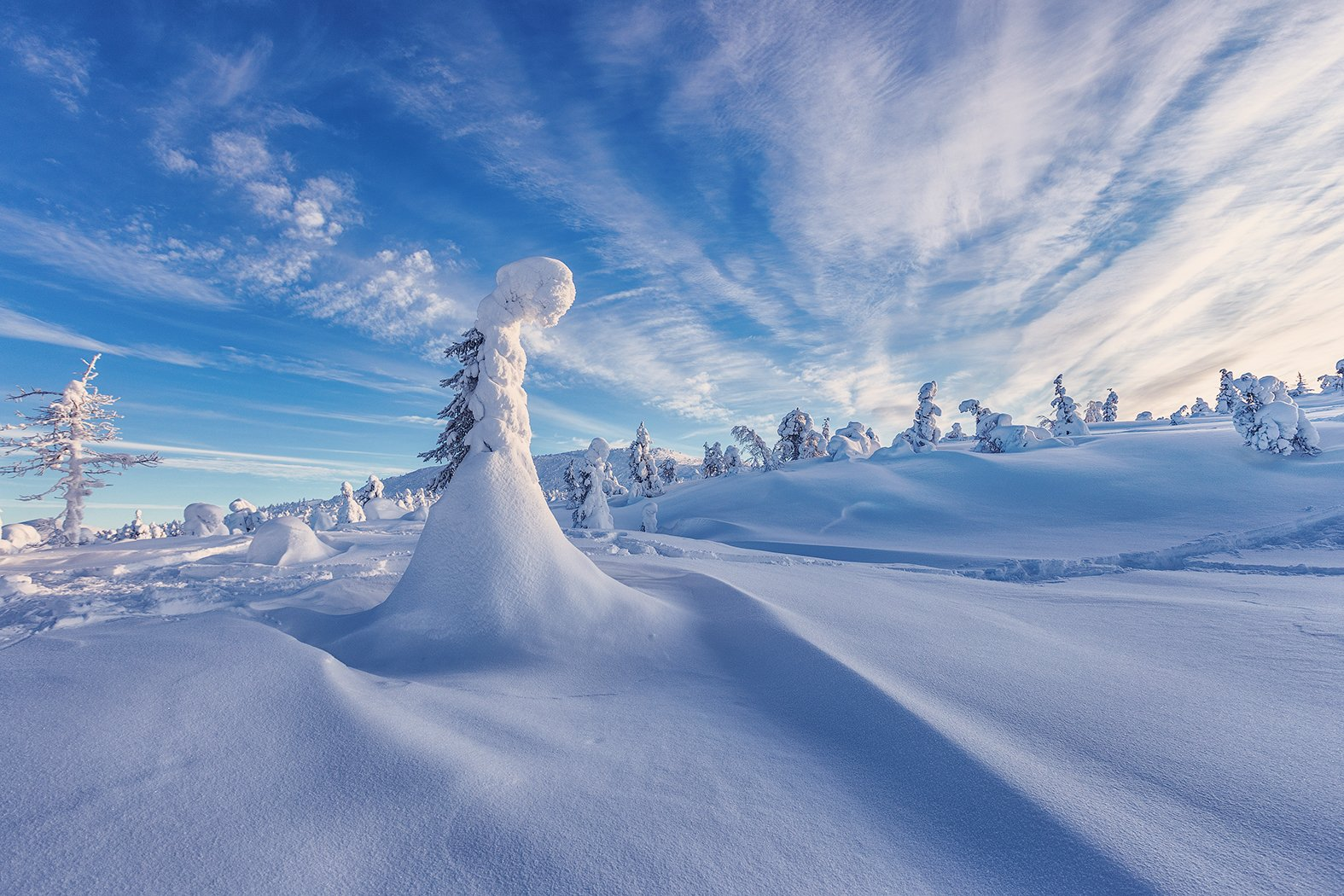 заполярье, гора, снег, ели, волосная, Липецких Владимир