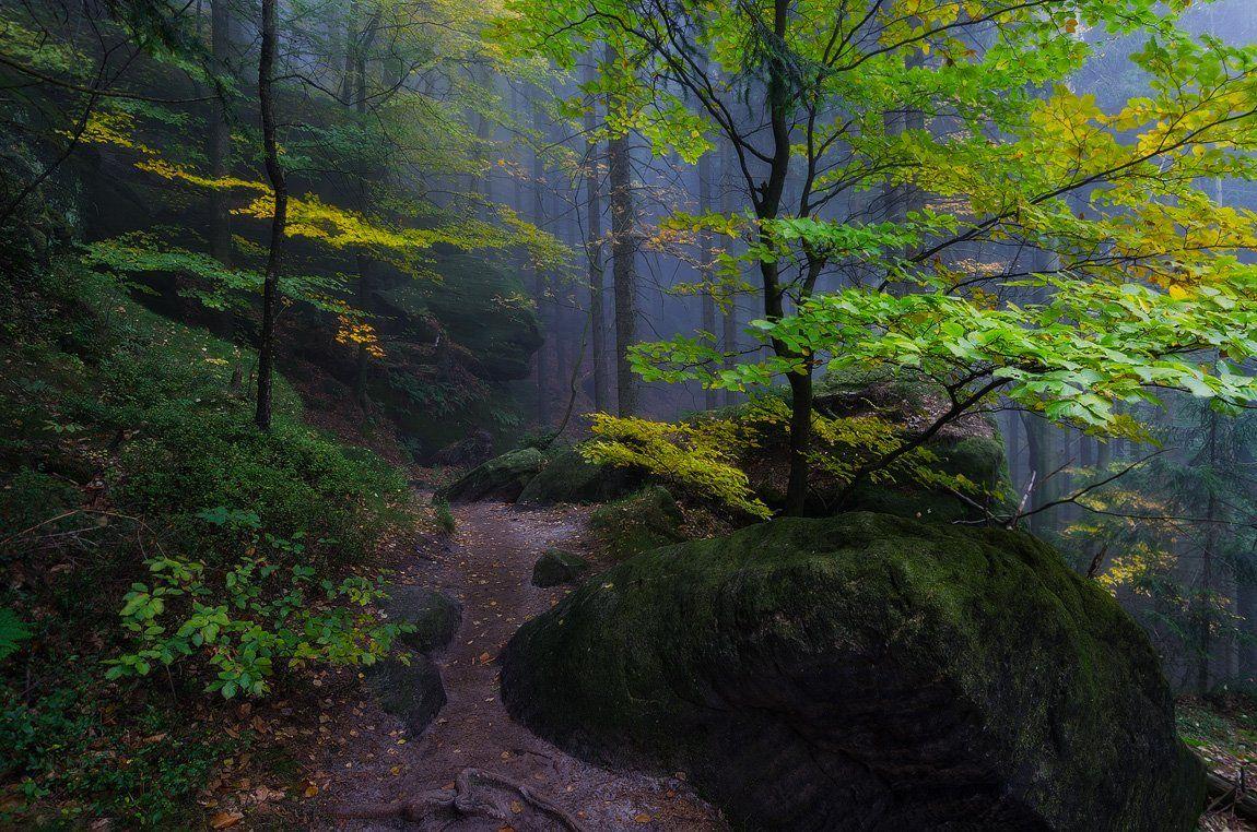 пейзаж,лес,осень,саксония,утро, Дмитрий Бойко