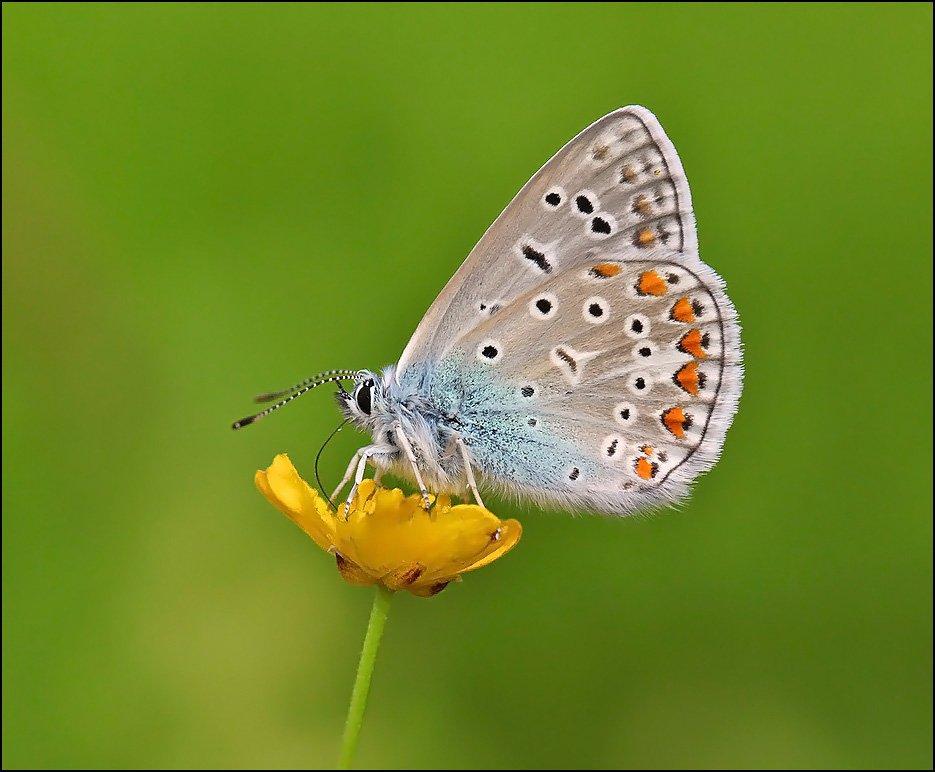 бабочка,макро,насекомые,, Корочкин Андрей