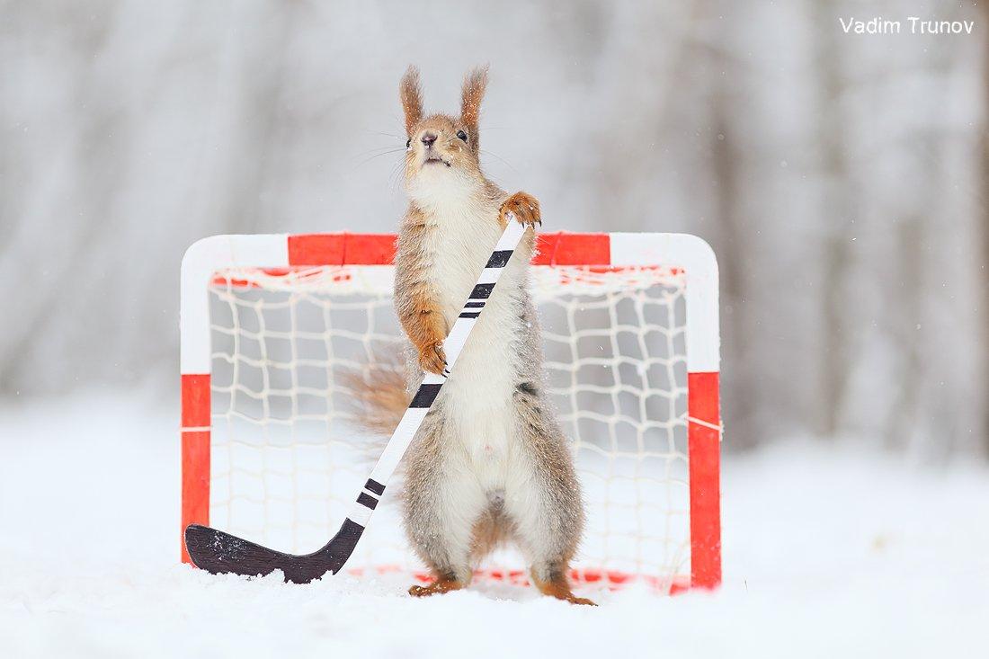 белка, хоккей, спорт, squirrel, Вадим Трунов