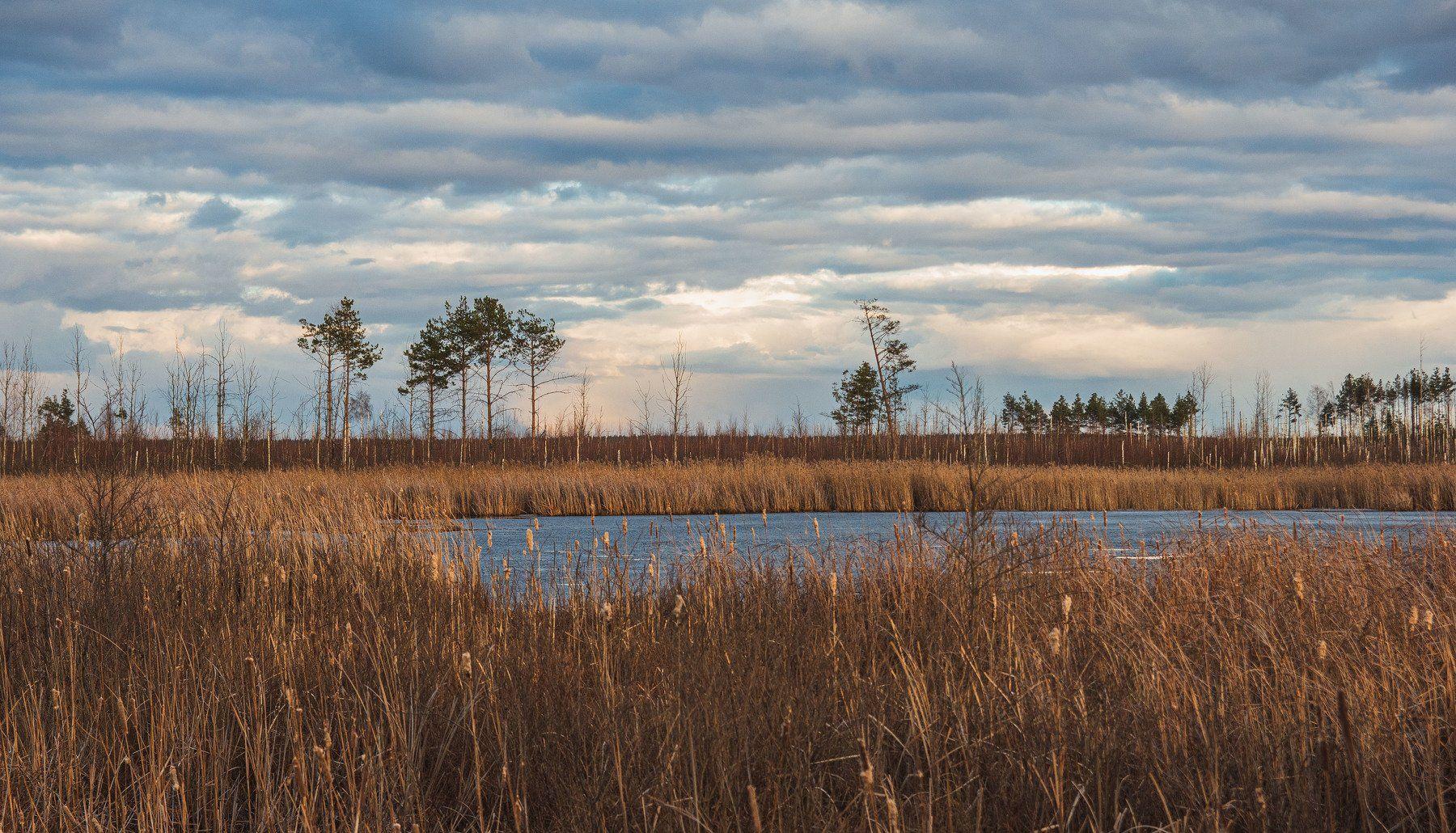 пейзаж, кулебаки, landscape, весна, spring, солнце, sun, небо, облака, heaven, clouds, закат,  sunset, болото, swamp, Васильев Владимир