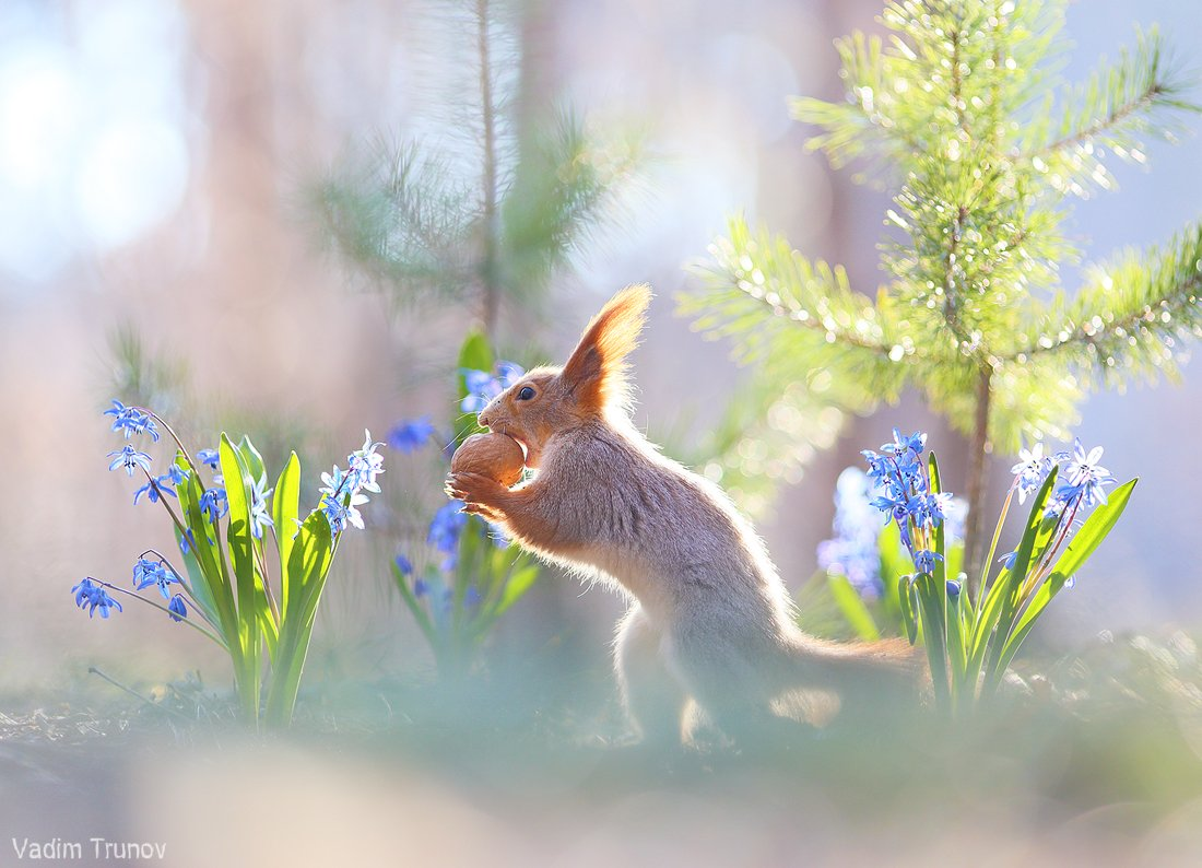 белка, весна, squirrel, Вадим Трунов