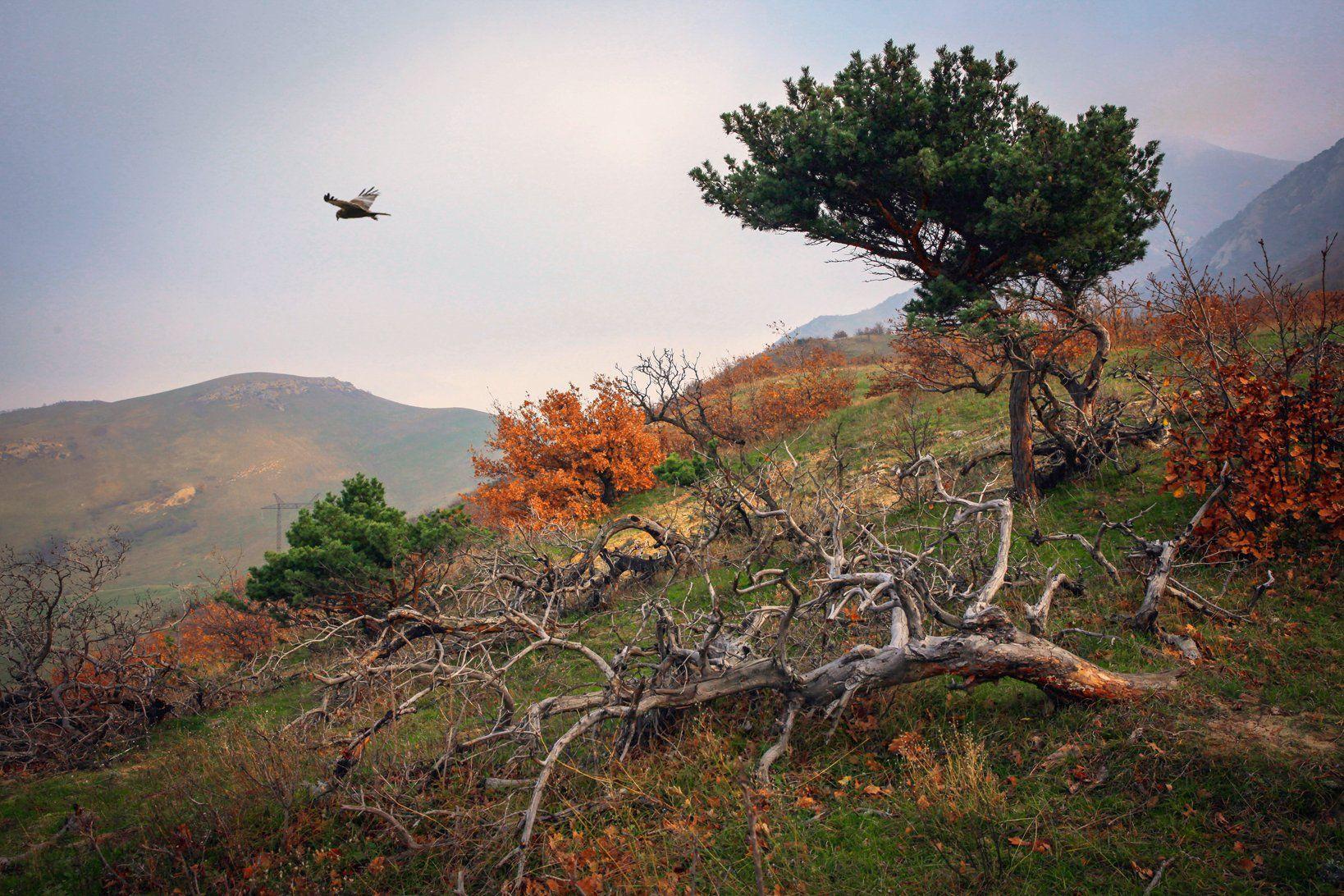 горы,птица,хищная птица,вершины,пейзаж,небо,деревья,дагестан,природа, Magov Marat