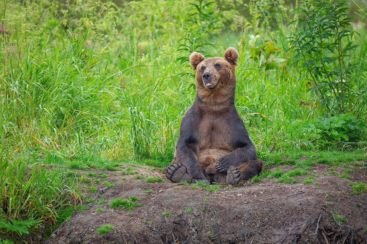 камчатка, медведь, природа, путешествие, фототур, Денис Будьков