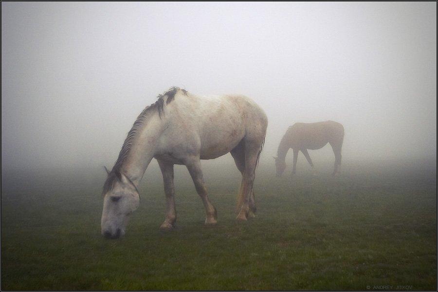 крым, туман, лошадь, пейзаж, Андрей Житков