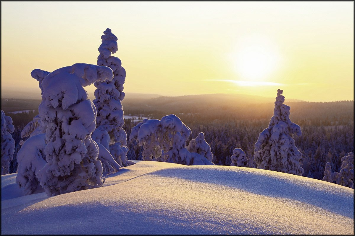Зимняя тайга ... Valtteri Mulkahainen