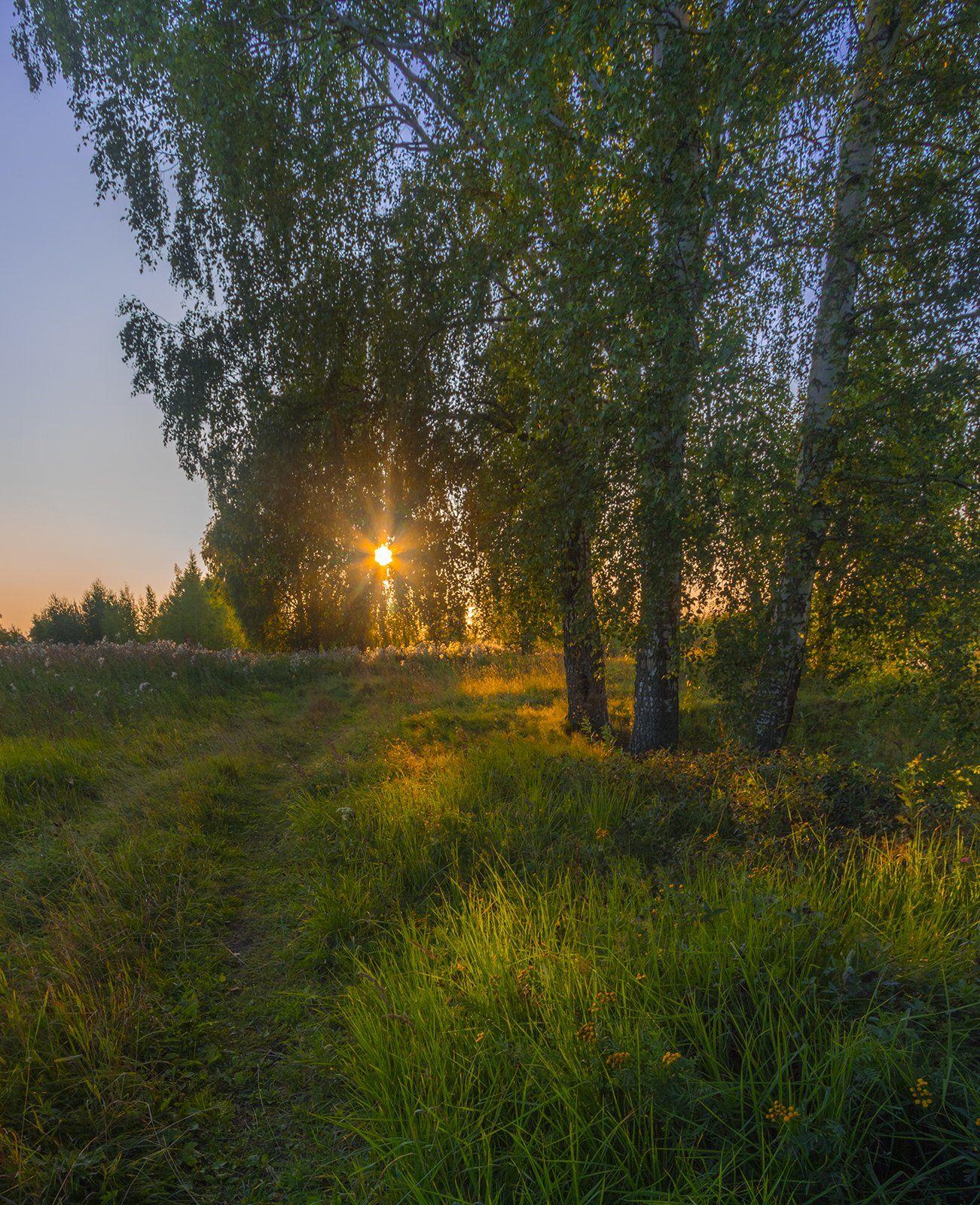 лето,вечер,пейзаж,берёзы, Елена Рубинская