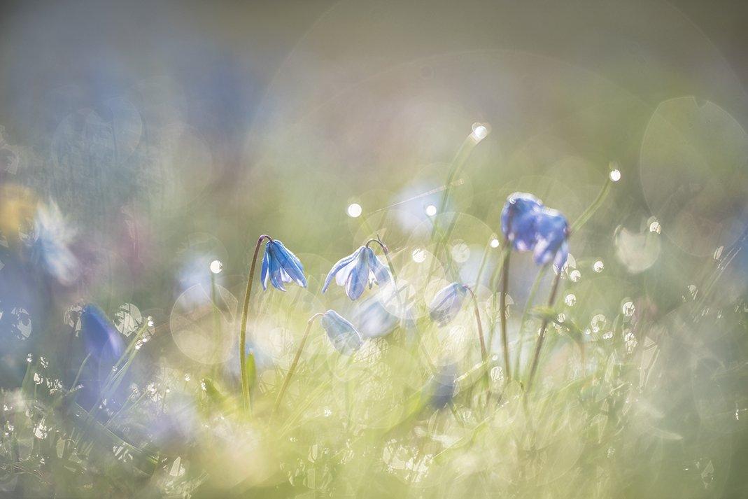 Феерия солнца и весенних цветочков. Геннадий Мещеряков