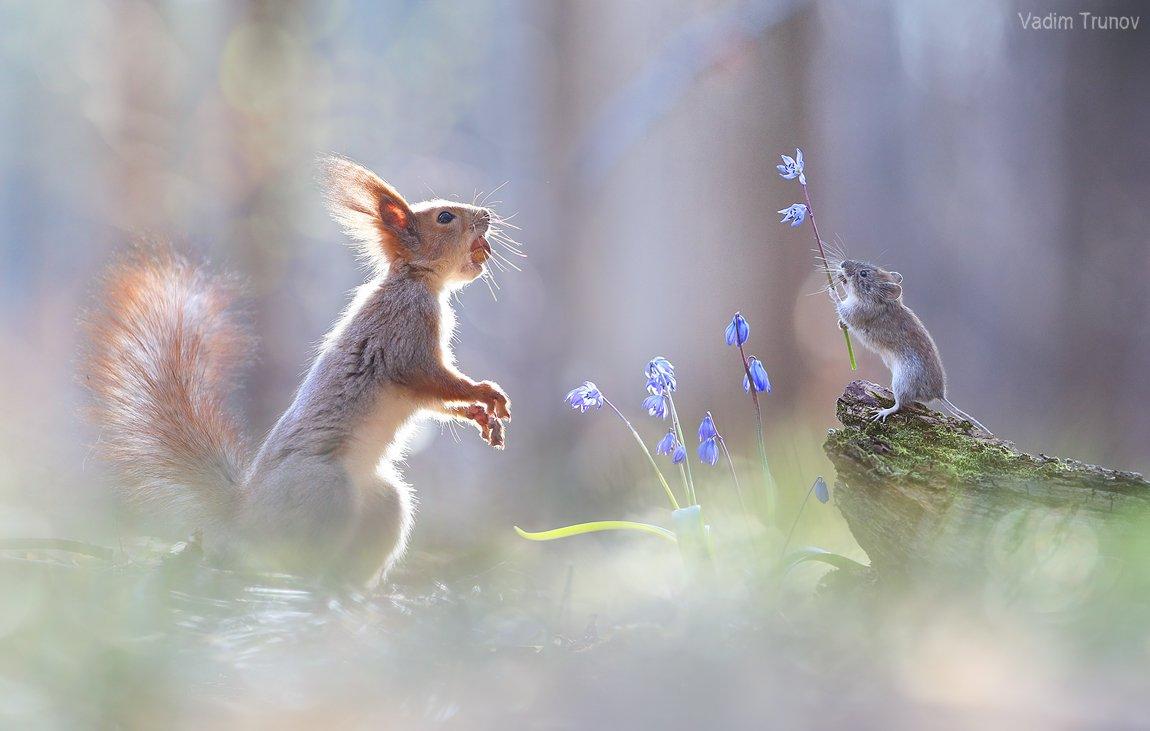 белка, мышь, squirrel, подснежник, Вадим Трунов