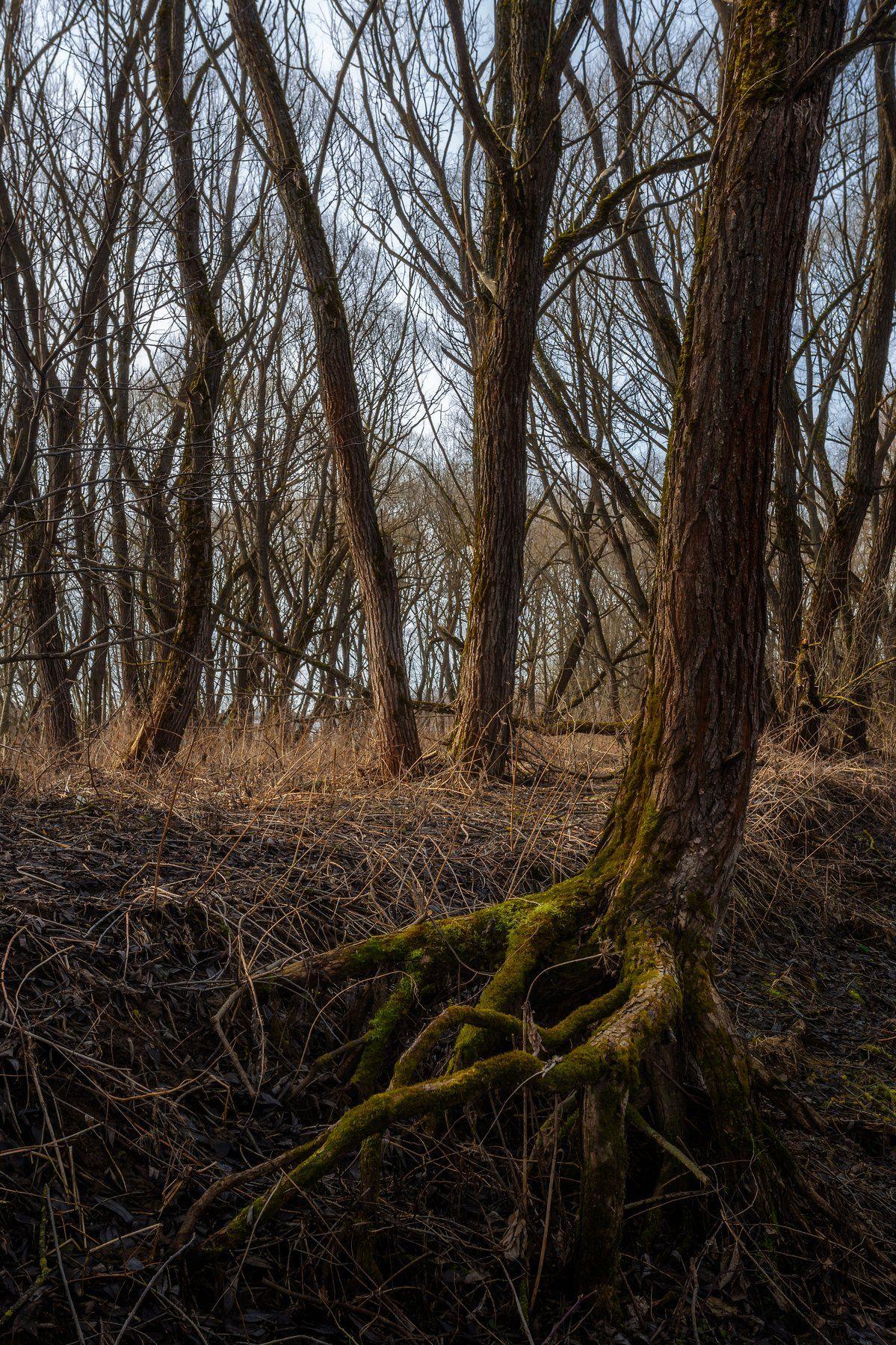 природа, пейзаж, деревья, весна, московская область, Мартыненко Дмитрий