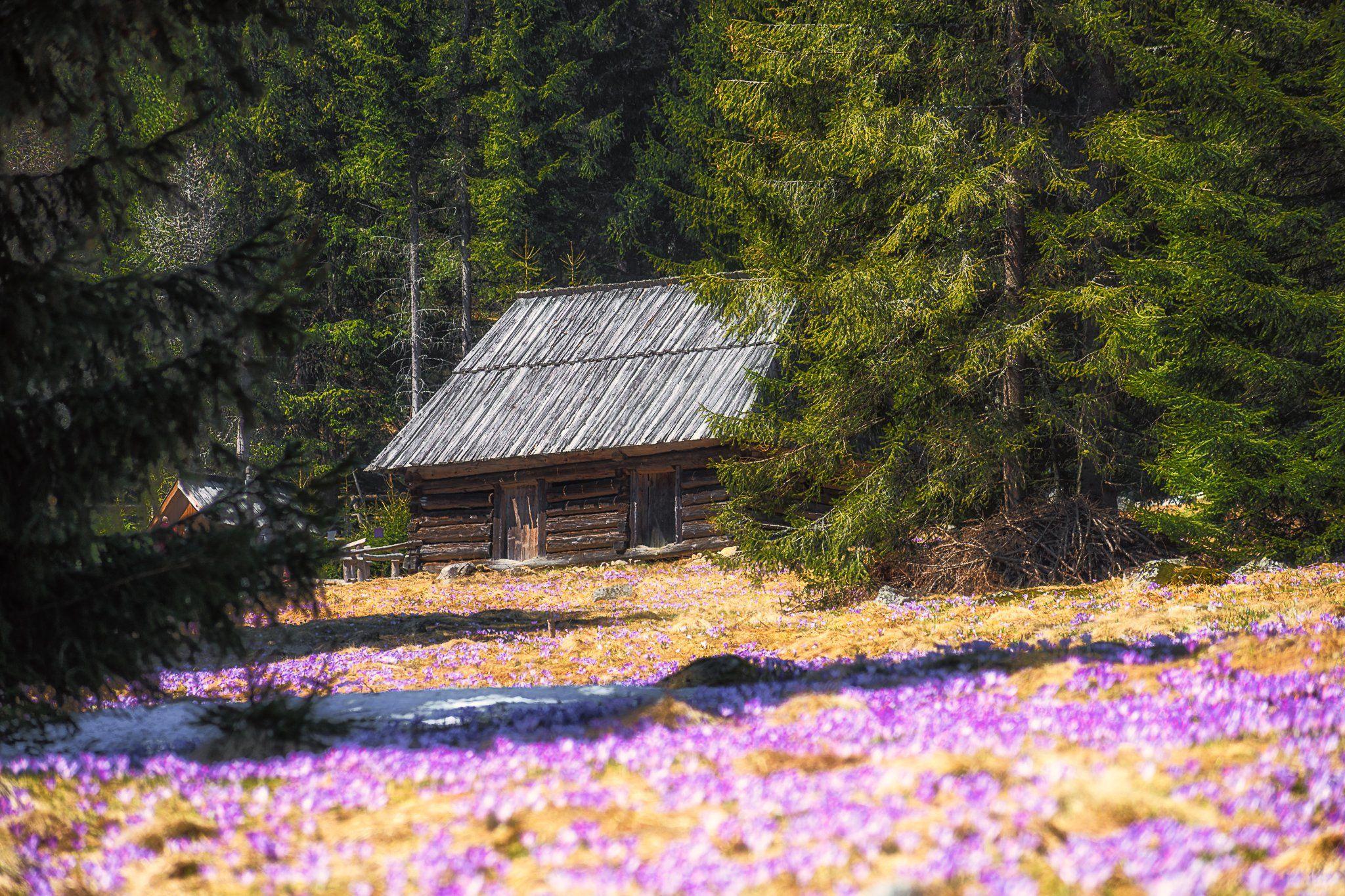 spring,mountains,tatras,forest, Marcin Mucharski