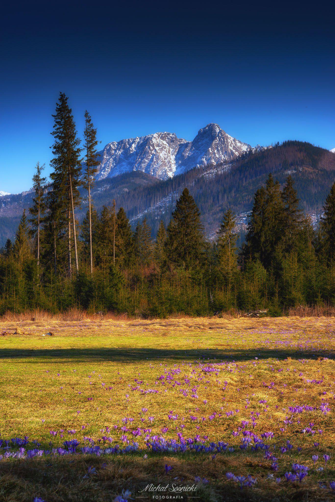 #mountain #tatras #landscape #color #pentax #benro #giewont #poland #crocus, Sośnicki Michał