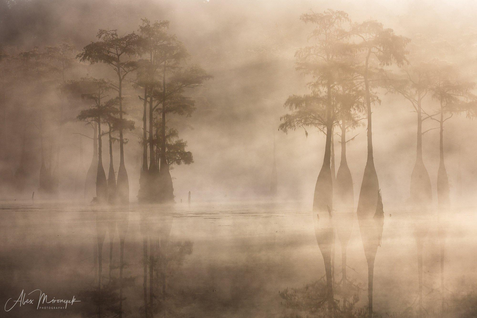 кипарис, болото, озеро, отражение, вода, туман, утро, осень, фото-тур, США, Mironyuk Alex