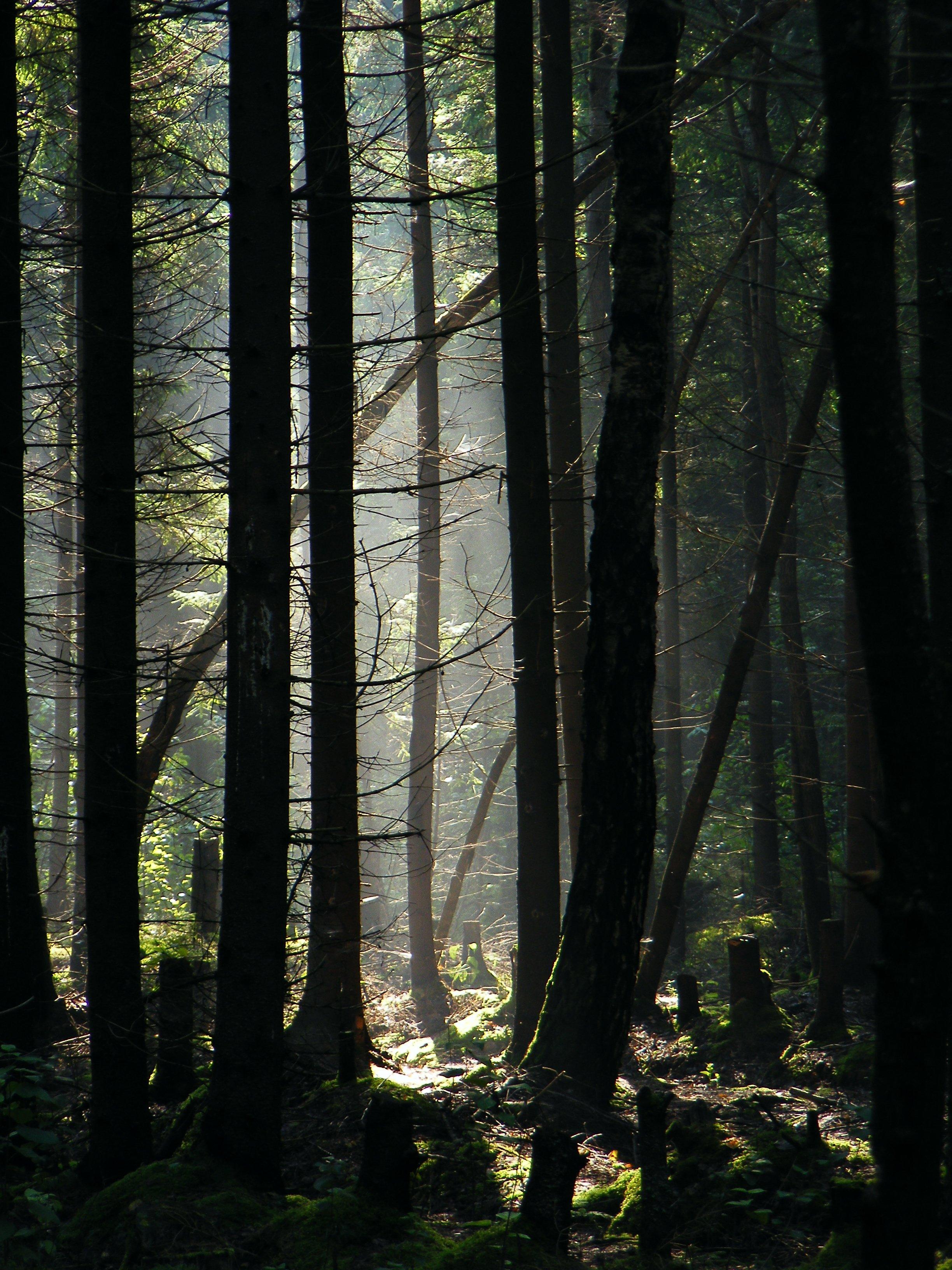 лес, утро, туман, красота, грибы, осень,, Верещако Валерий