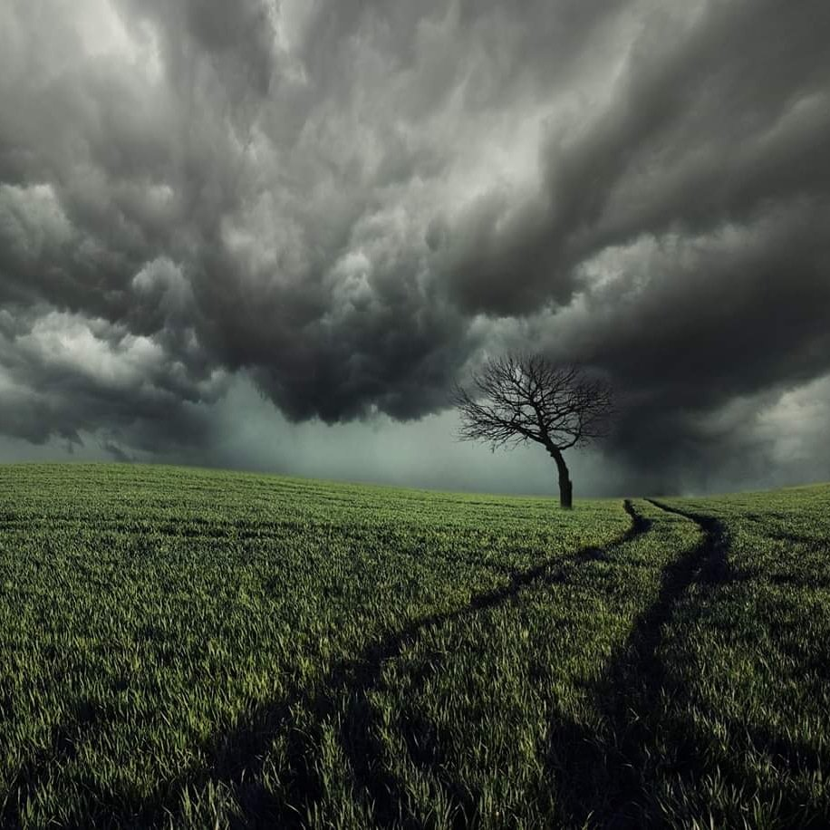 Lithuania, tree, sky, clouds, field, storm, Mindaugas Žarys