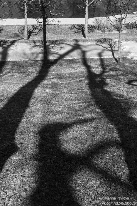 петергоф, нижний парк, тени,тени деревьев, весна,чёрно-белое фото,парейдолия, Павлова Марина