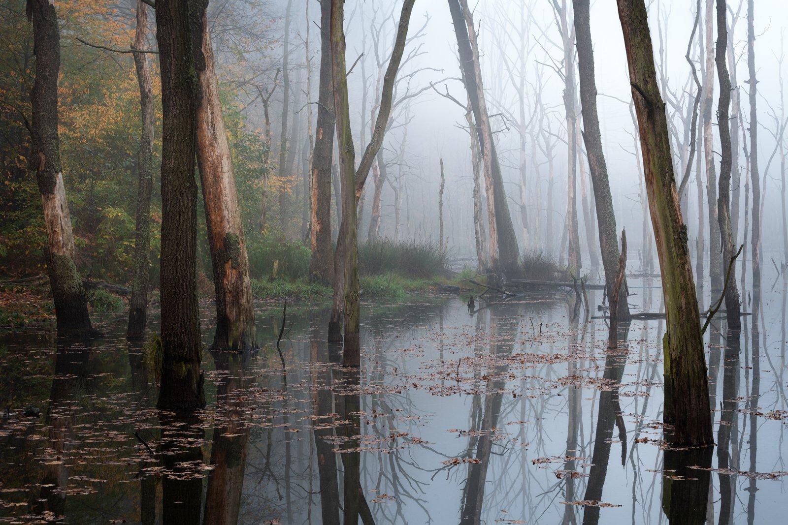 swamp, landscape, nature, water, tree,, Imiełowski Grzegorz