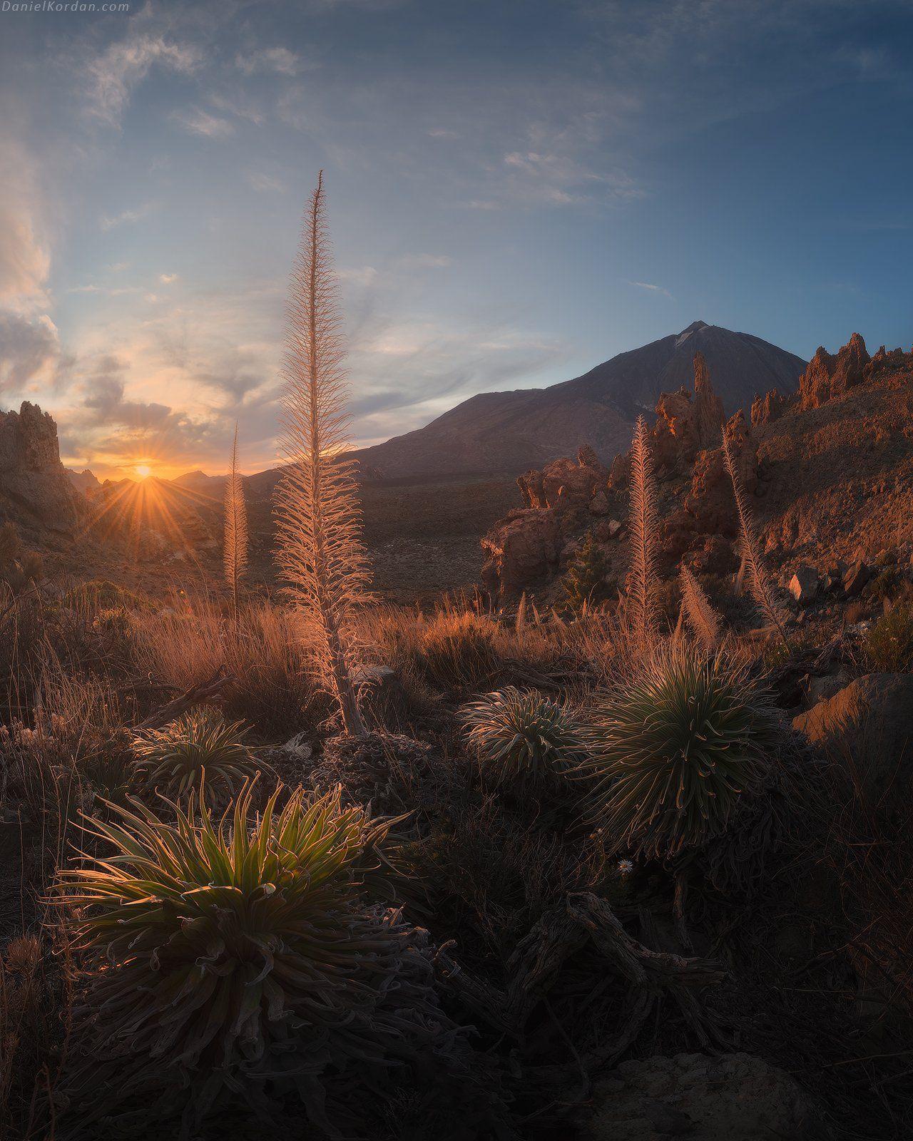 Tenerife, Даниил Коржонов