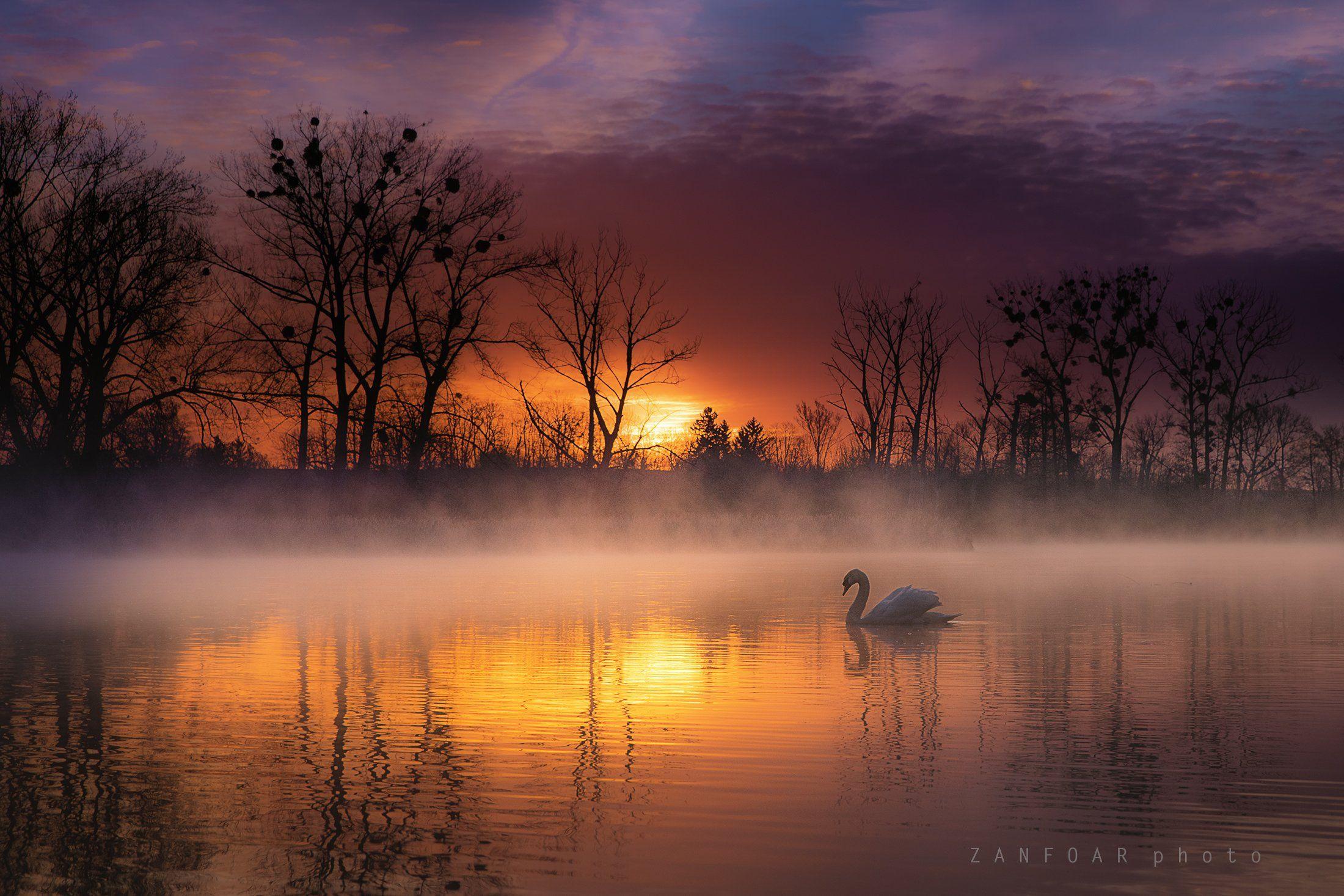 лебедь , озера,zanfoar,landsape,чехия, солнце,никон d750,czech republic, Zanfoar