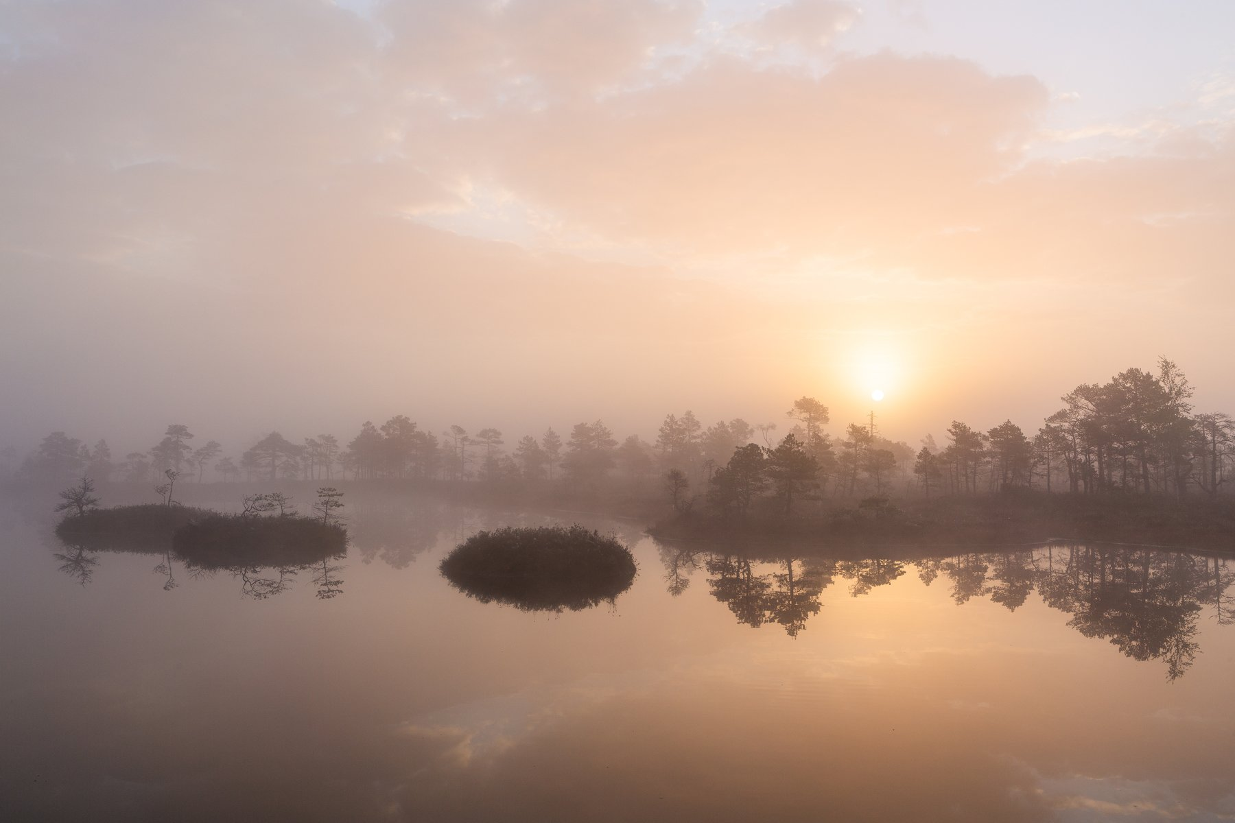 bog,marsh,swamp,lake,sunrise,forest,landscape,fog,, Zilbalodis Eriks