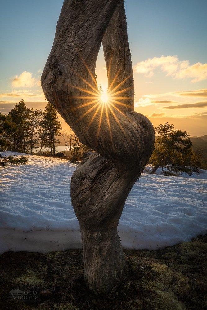 norway,norwegian,scandinavia,scandinavian,tree,sunset,sun,star,mood,nature,landscape, Szatewicz Adrian