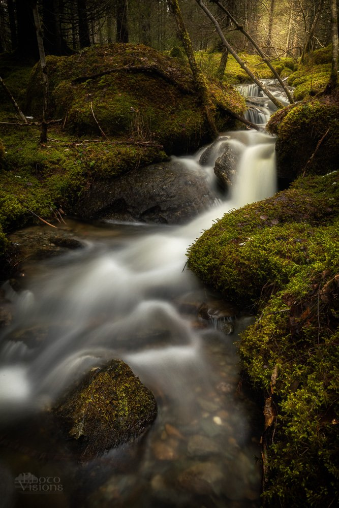norway,boreal,forest,woodland,norwegian,moss,green,tree,trees,stream,river,flow,flowing,long exposure., Szatewicz Adrian