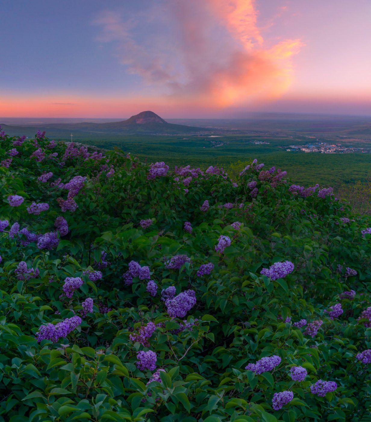 Сиреневый закат. Фотограф Елена Брежицкая