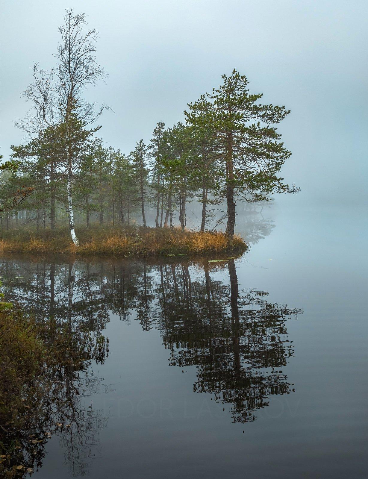 ленинградская область, рассвет, осень, пасмурно, сосна, озеро, туман, отражение, деревья, берег, непогода, серый, мыс,, Лашков Фёдор